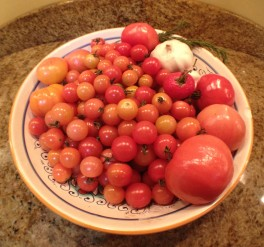 tomatoes-2016